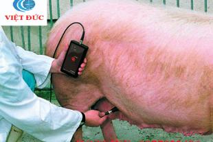 Máy khám thai lợn Draminski PDP